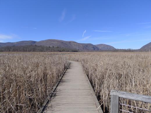 boardwalk marsh