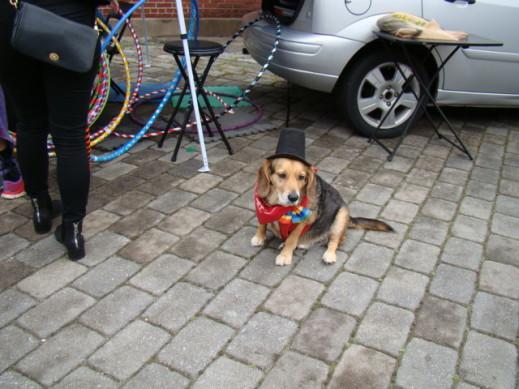 twirling arcade dog